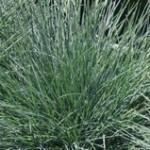 gramin es plantes tendances pour jardin naturel et sauvage. Black Bedroom Furniture Sets. Home Design Ideas