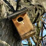 cabane-oiseau