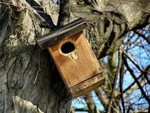 cabane a oiseau