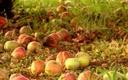 fruitier-novembre