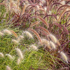 Graminées : plantes tendance et effet naturel