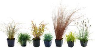 Gramin es plantes tendance et effet naturel for Plante decorative jardin