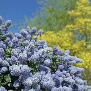 Cr er une haie fleurie quels arbustes choisir for Arbre fleurie pour jardin