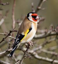 Attirer des animaux au jardin oiseau h risson insectes - Petit insecte rouge jardin besancon ...