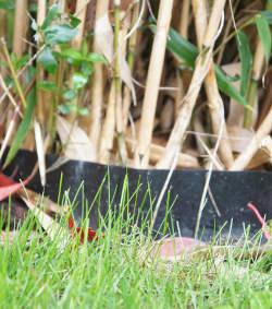 barriere anti rhizome bambou envahissant