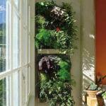 creer mur vegetal