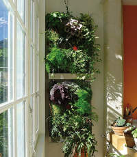 Cr er un mur v g tal for Creer son mur vegetal