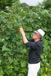 Haricot : semis, culture, récolte et entretien (+ Vidéo)