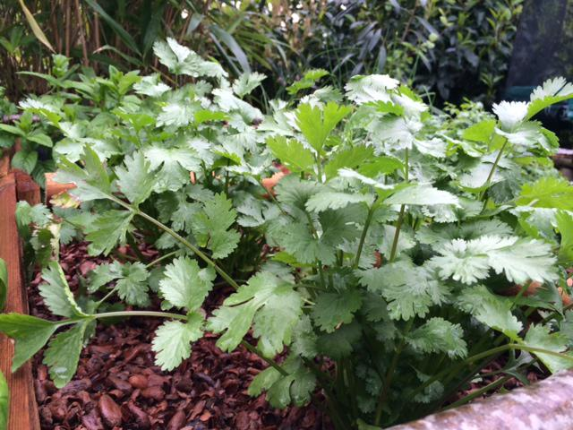 Jardiner malin jardinage conseils et recettes de saison for Www jardiner malin fr