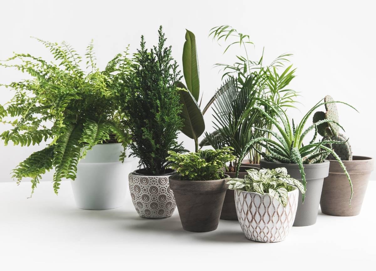 Plante depolluante interieur maison