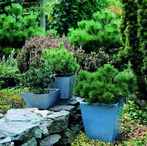 Create your own bonsai!