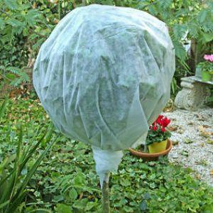 protection des plantes en hiver face au gel et au froid. Black Bedroom Furniture Sets. Home Design Ideas