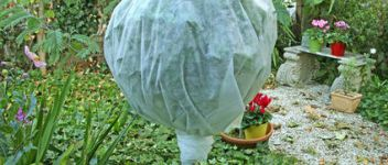 protection hiver plantes