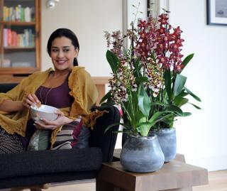 Lovely Mandarinier Qui Perd Ses Feuilles #2: Plantes-hiver.jpg