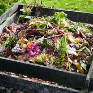 Attractive Compost : Tout Savoir Sur Le Compostage Des Déchets