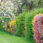 haie de jardin