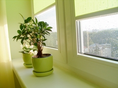 Air purifying indoor plants, why the hype?