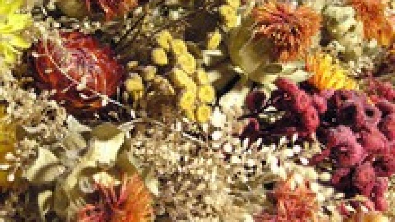Comment Conserver Des Fleurs Séchées bouquet de fleurs séchées : technique, conseils