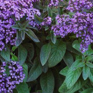 Forum lundi sissonz for Www jardiner malin fr