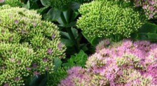 succulentes des plantes d 39 int rieur faciles et d coratives. Black Bedroom Furniture Sets. Home Design Ideas