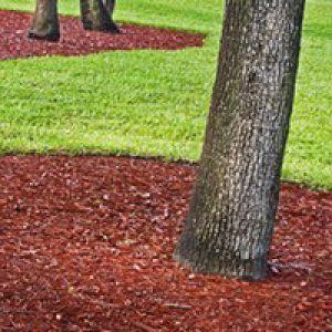 Paillage : a quoi sert le paillis au jardin