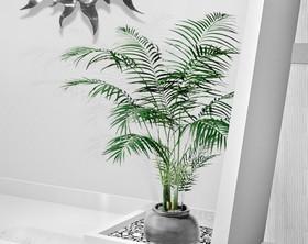 areca malade b tes blanches plantes du jardin et de la maison forum du jardin et du jardinage. Black Bedroom Furniture Sets. Home Design Ideas