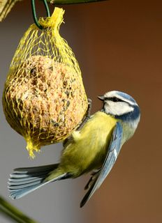 oiseau hiver nourrir