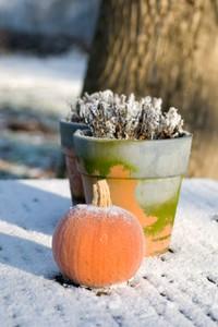 Jardinage En Janvier Travaux Et Conseils: jardinage en janvier