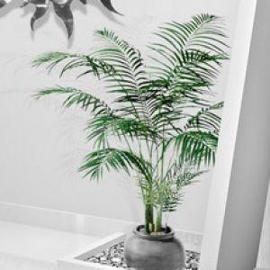 Chrysalidocarpus conseils d 39 entretien for Maladie plante verte