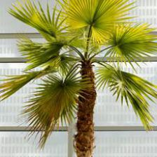arbres et arbustes plantation taille et conseils d 39 entretien. Black Bedroom Furniture Sets. Home Design Ideas