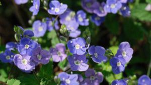 veronique fleur