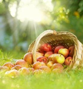 Jardinage en octobre conseils et travaux for Conseils en jardinage