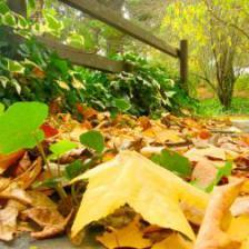 jardinage decembre