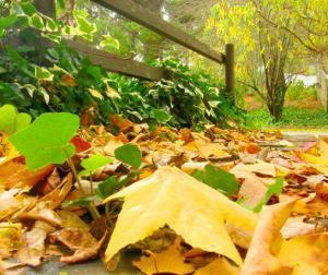 Jardinage en d cembre travaux et conseils Jardinage en janvier