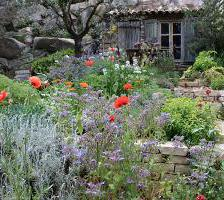 Mediterranean garden planting ideas