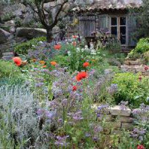 Jardin méditerranéen : des idées de plantation