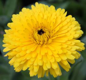 http://images.jardiner-malin.fr/2014/04/1334823074souci.jpg