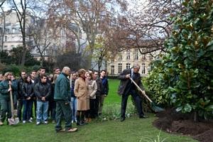 plantation d 39 un magnolia grandiflora dans les jardins de matignon. Black Bedroom Furniture Sets. Home Design Ideas