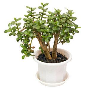 Identification succulente cactus plantes du jardin et de la maison forum du jardin et du - Plante grasse succulente ...