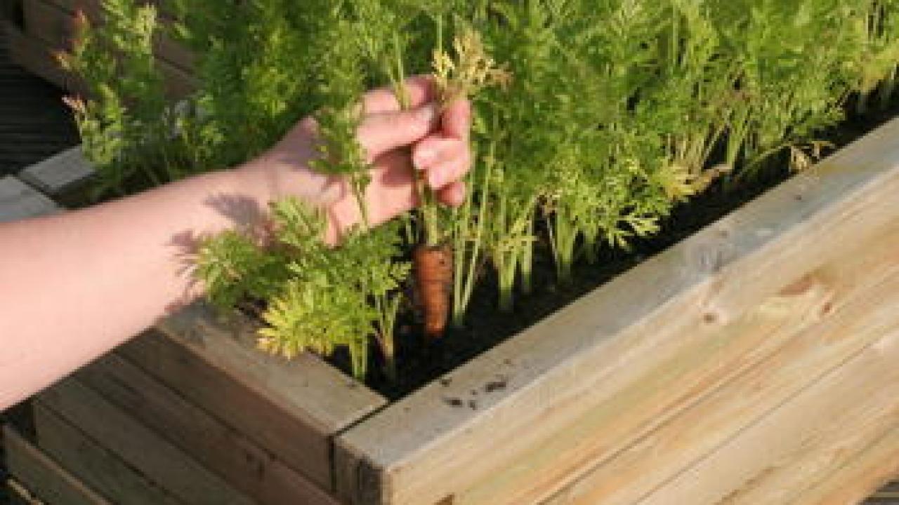Fabriquer Potager Carré En Bois potager en hauteur : le construire et le cultiver