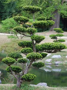 1362727434taille-arbre-en-nuage