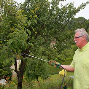 Traitement bio des arbres fruitiers - Traitement arbres fruitiers avec bouillie bordelaise ...