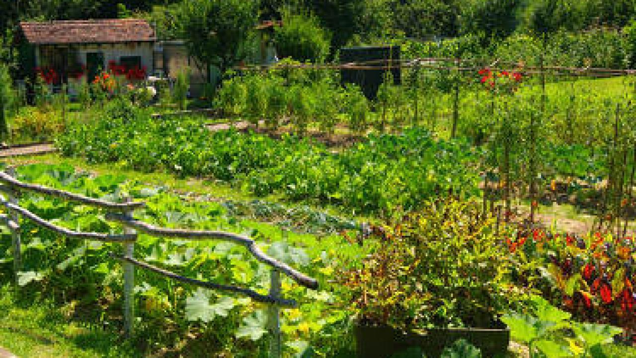 Que Faire Dans Le Potager En Fevrier au printemps : semis et plantation au potager