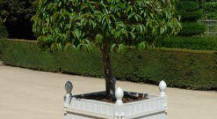 exochorda plantation taille et conseils d 39 entretien. Black Bedroom Furniture Sets. Home Design Ideas