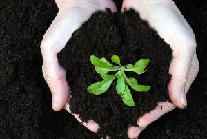 How to know your type of garden soil