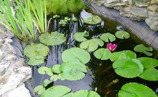 mare naturelle cr er et am nager une mare dans son jardin. Black Bedroom Furniture Sets. Home Design Ideas