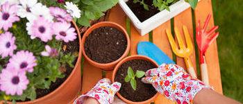 jardinage juin