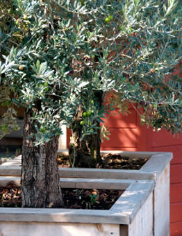 plantes sans arrosage au besoin en eau limit. Black Bedroom Furniture Sets. Home Design Ideas