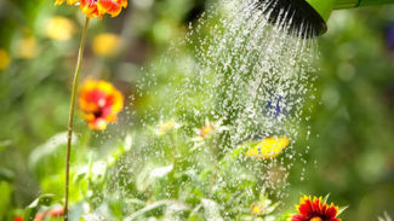 Comment Arroser Jardin Pendant Vacances vacances : prévoir l'arrosage