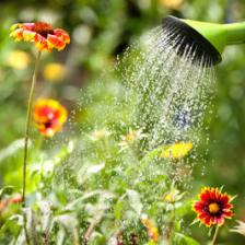 Out for the holidays, how to deal with the watering